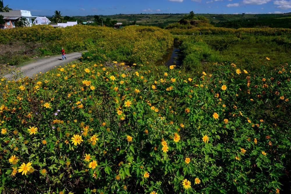 ba địa điểm săn hoa dã quỳ