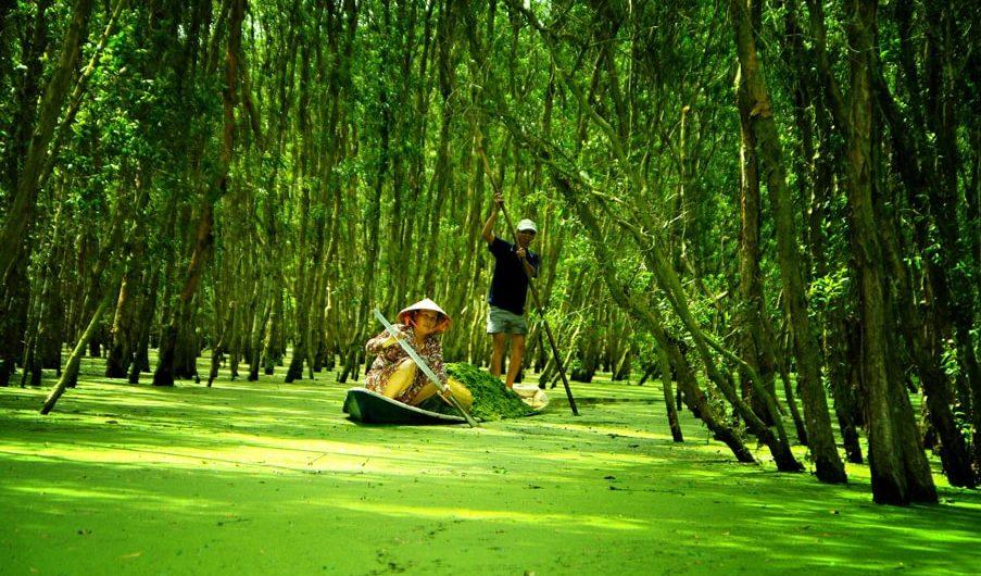 Là niềm tự hào du lịch của tỉnh, Trà Sư mang đầy đủ những nét đặc trưng sông nước, với hệ sinh thái điển hình của vùng rừng ngập nước phía Tây sông Hậu.