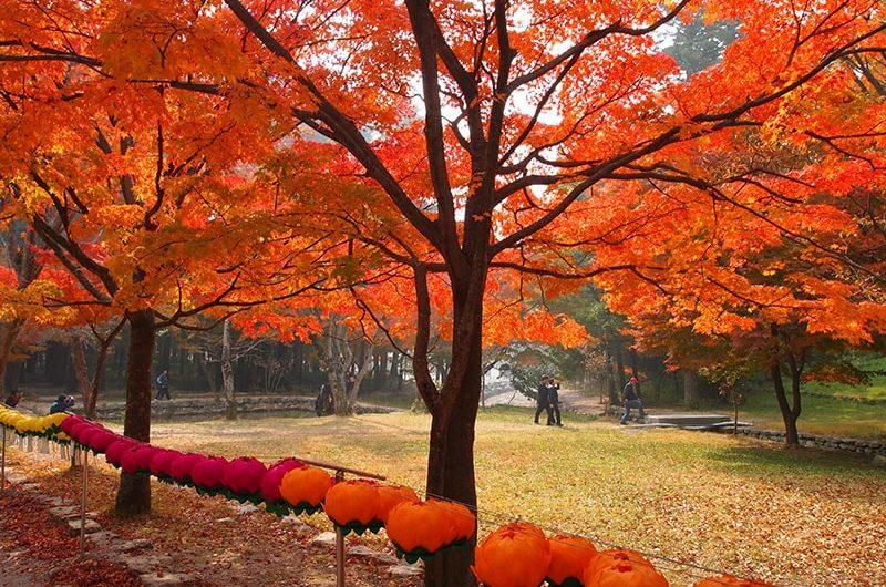 Hàn Quốc mùa thu lá đỏ