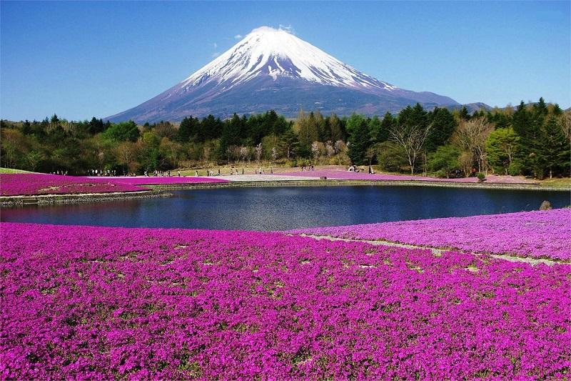 Núi Phú Sĩ - Danh lam thắng cảnh nổi tiếng ở Nhật Bản