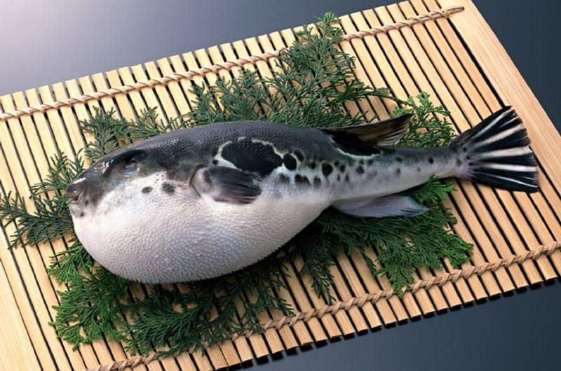 """Thưởng thức đặc sản cá """"Nóc"""" qua bàn tay tài ba của người Nhật Bản"""