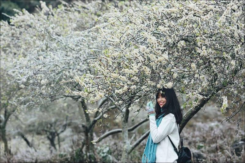 Hoa mận nở rực trắng xóa khắp một vùng trời