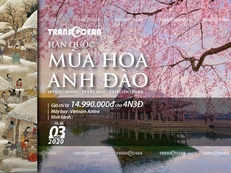 MÙA HOA ANH ĐÀO  SEOUL - NAMI - EVERLAND - BLOSSOM FLOWERS YEOUIDO PARK