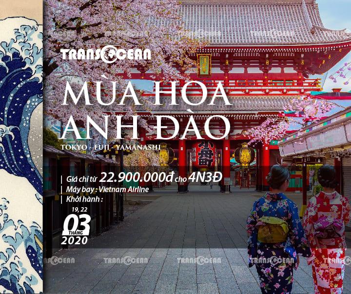TOUR MÙA HOA ANH ĐÀO NHẬT BẢN   TOKYO – FUJI – YAMANASHI